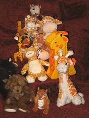 Brownsville Thrift Stores Toys (dog.happy.art) Tags: bear rescue toy toys stuffed soft plush giraffes giraffe thriftstore scotty scottie