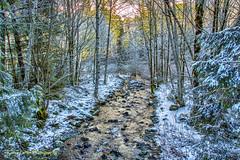 Change Creek (KPortin) Tags: trees snow stream topaz changecreek winterfilter