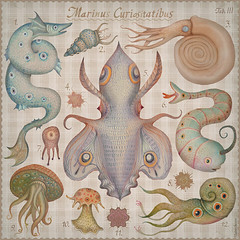 Marine Curiosities Tab. III (VLADIMIR... . . .) Tags: ocean nature illustration sealife naturalhistory squid octopus monsters seadragon seacreatures narwhal marinelife cephalopod seaserpent cephalopods naturalhistoryillustration marinecuriosities cephalopodoptera