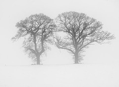 Simple Nature Scene - Two Trees on a Winters Day in Scotland (Magdalen Green Photography) Tags: winter snow cold pretty tayside twotrees scottishwinter simplenaturescene iaingordon magdalengreenphotography wintersdayinscotland 0329b