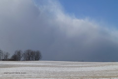 Squall behind trees (Cathy Contant) Tags: winter sky snow storm squall january