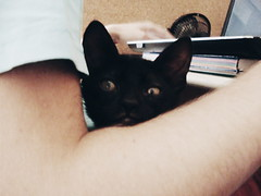 When Kiko was a cute baby (hug0ncalves) Tags: babycat baby blackcat supercute cute cuteness photo photography cat funny love