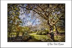 CALDERSTONES  PARK (Derek Hyamson) Tags: hdr calderstones park liverpool pse8