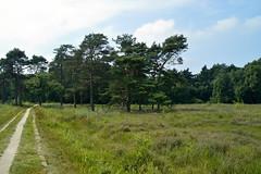 Bokdammerveld (l-vandervegt) Tags: 2016 nikon d3200 nederland netherlands holland niederlande paybas overijssel delden twickel bokdammerveld natuur nature groen green hiking buiten outdoor trees bomen boom tree