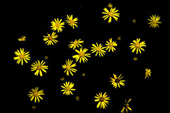 Natures Fireworks (Boba Fett3) Tags: flower yellow outside outdoors flora wildflowers