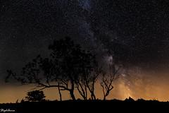 Stardust (StephAnna :-)) Tags: bume creuxduvans langzeitbelichtung leuchten milchstrasse nacht nachtaufnahme sterne sternenhimmel arbres longexposure lueur milkyway night nuit trees voielacte toiles
