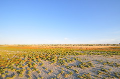 DSC_0078-001 (Great Salt Lake Images) Tags: summer morning causeway antelopeisland greatsaltlake utah
