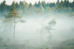 Dancing trees (Rainer Schund) Tags: dancing trees moor fog germany forest nebel nebelmeer tamron landschaft landscape nikon natur nature natureexploring naturemasterclass nikond4