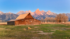 Moulton Barn, Grand Teton (MarkWarnes) Tags: cottonwoodtrees autumn grandteton barn mormonbarn antelopeflats wheat moranjunction grandtetonnationalpark farm mormonrow fall moultonbarn homestead
