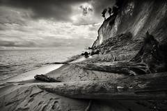 Trees (hansekiki ) Tags: rgen jasmund beach strand nationalpark ostsee balticsea baum bume zeissdistagont2815mm distagon1528ze distagont2815 canon 5dmarkiii