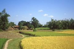 thakurgaon078 (Vonkenna) Tags: bangladesh thakurgaon seismicexploration scenery fertile grain