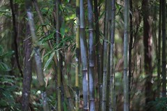 Temple Bamboo (bamboosage) Tags: helios 402 1585 preset m42 russia