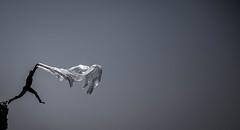 Freedom (Ommation (Vasilis Benakis)) Tags: kithira greece freedom fly air beach rock blackandwhite jump kaladi κύθηρα ελλάδα ελευθερία elitegalleryaoi bestcapturesaoi