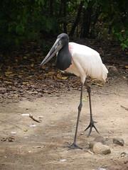 P2230311 (Gareth's Pix) Tags: aviarionacionaldecolombia baru colombia aviario bird