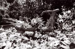 Minolta Prod 20 Busch Gardens 5 () Tags: original busch gardens pasadena los angeles california history heritage theme park film tour mill waterwheel 1920s adolphus public private abandoned minolta prod 20 auto focus retro vintage classic 35mm point shoot camera japan 90s