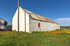 IMG_2959 (francois f swanepoel) Tags: corrugatediron flowers glyniswalbrugh karoo namakwalandblomme namakwalandflowers noordkaap northerncape red rooi shed sheds sinkplaat skuur white wit