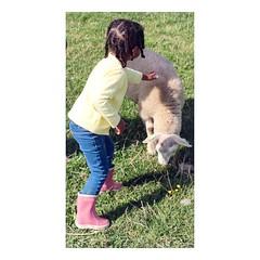 (tifanm_laurent) Tags: mouton animaux children thenetherlands nederland hollande holland paysbas farm ferme fillette littlegirl child childhood enfance enfant