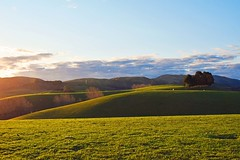 Rural Retreat. (Gadgetman@Nikon) Tags: kapuacanterburynewzealand ruralretreat craigmeechin farmland rural country greenpasture landscape castingshadows rollinghills hills light beautifullight newzealand serene colour colourful nikon nikond3300 180550 f3556 sun warmtones