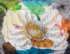 DSC0966860 (scott_waterman) Tags: scottwaterman painting paper ink watercolor gouache lotus lotusflower