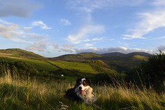 My Land. (Mike & Indy) Tags: laddie dog dogs bordercollie llanfairfechan northwales landscape carneddau mountains snowdonianationalpark