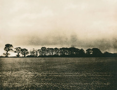 Tree Line (justin.syndercombe) Tags: film darkroom lith fomatone moersch carbon gowland pocketview