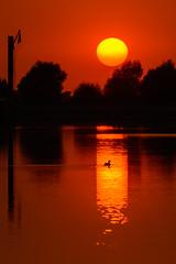 Sunset light (jwfoto1973) Tags: sunset sonnenuntergang sonne sun spiegelung reflection light silhouette silhouetten nikon johannesweyers d7100 deutschland germany griethausen altrhein altrheinarm vogel bird ente duck