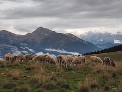 Paesaggio (Luciano Sperandio) Tags: malga arpaco gregge pascolo