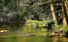 DSC_1705-Edit (zeiberc) Tags: outdoor nature streams nikond3300 on1flowersplantsgoogleniknatureon1springspringtopazadjust5topazdejpegd3300nikkor55300