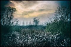 Autunno (Raul-64) Tags: autunno paesaggio bassapadovana albero cielo tramonto veneto