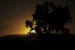 IMG 4525 (Eminpee Fotography) Tags: sun trees bush