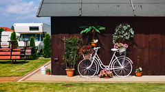 12.09.2016 (Fregoli Cotard) Tags: garden decoration flower flowerpot bicycle bike trailer rb rv dailyjournal dailyphotograph dailyphoto daily everydayphoto everydayphotography everydayjournal aphotoeveryday photojournal photodiary photographicaljournal 366 366daily 366dailyproject 366days 366dailyphoto 366dailyjournal 366project 366photoproject 256366 256of366
