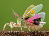 IMG_0094 - EX (thienbs) Tags: macro mantis insect explorer thienbs
