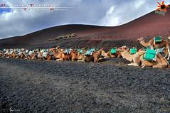 """LANZAROTE """"Parco del Timanfaya"""" *Canarie* [15.11.2012] [Explore] (SUPER@ANDREA@SHOW) Tags: cactus sun castles blanco clouds faro lava holidays surf nuvole andrea ships lanzarote muse"""