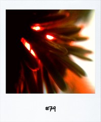 "#DailyPolaroid of 16-12-12 #79 • <a style=""font-size:0.8em;"" href=""http://www.flickr.com/photos/47939785@N05/8291030870/"" target=""_blank"">View on Flickr</a>"