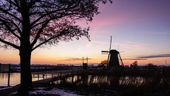 High Trees Catch a Lot of Wind (ace_dave) Tags: netherlands thenetherlands kinderdijk zuidholland dutchwindmills winterinthenetherlands windmillssunset nikon1024 nikond300s dutchsilhouette pinksunsetandblackwindmill thebridgethetreeandthewindmill