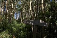 Junction: Pretty Canyon | McKnight (Reptilian_Sandwich) Tags: blue trees wild summer plants mountains newmexico green leaves sign forest walking outdoors oak solitude path junction trail solidarity trunks aspen hillside conifer afternoonlight blackrange mountainlocust