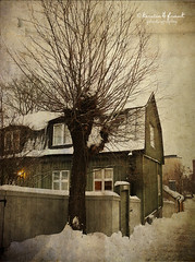 The Lonely Willow (Kerstin Frank art) Tags: trees winter house snow building tree texture photoshop stockholm willow lonelytree skinnarviken lesbrumes kimklassentexture kerstinfrankart