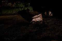 (ziemowit.maj) Tags: street nightphotography plants texture tarmac night f14 driveway archway carlights longshadow ef35mmf14l brownshoppingbag canon7d