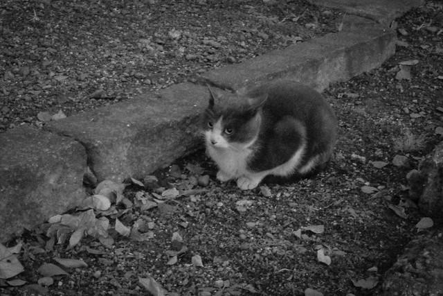 Today's Cat@2012-12-27