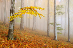 Autumn Forest (Martin Rak Photography) Tags: autumn trees light mist fall colors leaves fog forest republic czech trunks beech