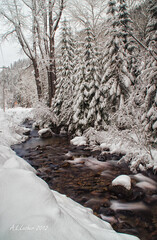 Perfect Snow On the Trees (SimplyAmy74) Tags: longexposure winter snow water pacific northwest streams winterwonderland northidaho