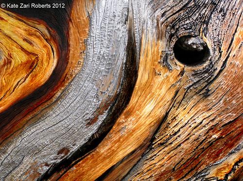 Photo - Dead Tree study