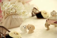 lovely shih tzu and maltese cake topper (charles fukuyama) Tags: wedding dog puppy couple sweet anniversary shihtzu accessories lovely custom maltese sculpted cakedecoration weddingcaketopper claydoll handmadewedding animalscaketopper dogscaketopper kikuike