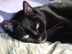 Nap Number Five (knightbefore_99) Tags: cat gato chat noir negro black nap rest sofa blanket afternoon sleep eyes yellow pretty sweet baby
