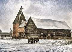 Grazing in the snow (Hughsie36) Tags: winter snow sheep farm worcestershire worcester oasthouse uploaded:by=flickrmobile flickriosapp:filter=nofilter