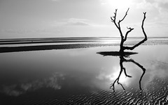 I am at ease here. (eddieELM) Tags: blackandwhite bw white black reflection tree beach water beautiful canon reflections dead eos ngc australia brisbane queensland hss nudgee 600d nudgeebeach 2013 canoneos600d