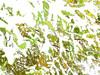 Snowfir (Pickford Studios) Tags: birthday christmas wedding abstract modern print restaurant hotel design photo office photos anniversary contemporary quality interior wallart special photographs photograph gift birthdaygifts presents present birthdaygift weddinggift interiordesign designers birthdaypresent christmaspresents christmaspresent birthdaypresents christmasgift christmasgifts weddingpresent weddinggifts interiordesigns highquality anniversarygift weddingpresents interiordesigners anniversarypresent anniversarygifts anniversarypresents pickfordstudios pickfordstudiosltd