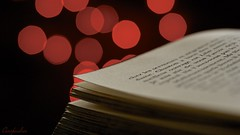Book-eh (Caropaulus) Tags: red rouge book bokeh livre macromondays