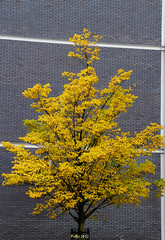 Hefst knaller (lhb-777) Tags: street city morning light house streetart black holland tree art wet rain amsterdam yellow contrast grey licht cool nice bomen funny cityscape foto view autum kunst magic centre great herfst picture nederland nat schilderij mooi huis effect geel zwart mokum centrum pritty regen anders stad beeld grijs apart cityview actie straat oost leuk archief grappig geweldig lijn colourfull stadsarchief vroeg internationaal uniek bekeken geinig andersbekeken canon550d pvb2013