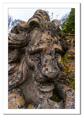 Lion statue at the rose garden (Travels with a dog and a Camera :)) Tags: park uk england sculpture house southwest west art rose statue digital photoshop garden bristol dc pentax unitedkingdom nt south january lion sigma andrew national trust 1020mm nationaltrust rosegarden bennett 43 lightroom k7 tyntesfield wraxall andrewbennett cs6 2013 1456 justpentax sigma1020mm1456dc pentaxart pentaxk7 photoshopcs6 lightroom43